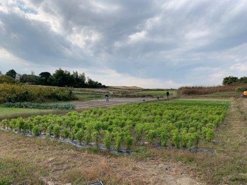 マリノ農場体験【名古屋名西キャリアセンター】